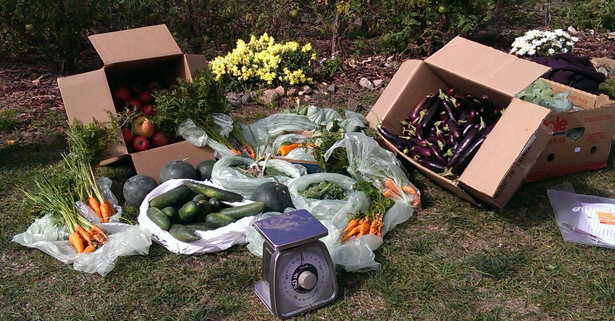 Grow your own greens with a community garden plot